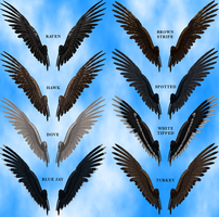Feathered Wings 2B Stock Pack by Aazari-Resources