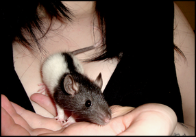 Jack the Ratter by bloodyneptune