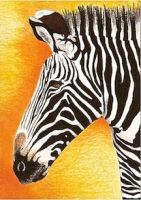Day 23: Grevy's Zebra ACEO by whitetippedwaves