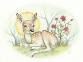 Sacred Fawn by DeerDandy