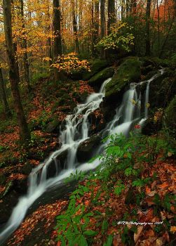 GSMNP Autumn 3 by TRBPhotographyLLC