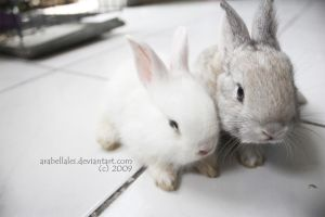 Bunny Love by ArabellaLei