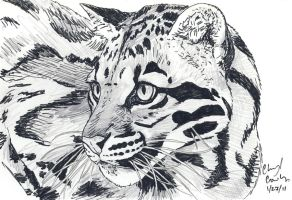 Clouded Leopard Girl by silvercrossfox