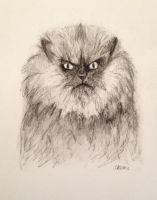 RIP Colonel Meow by cluelessakemi