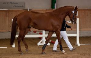 Freejumping Championship 2014_296 by CalyHoney