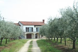 farm with olive trees 2 by ingeline-art