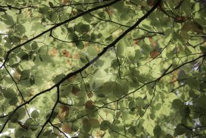 Leaves 2 by tpphotography