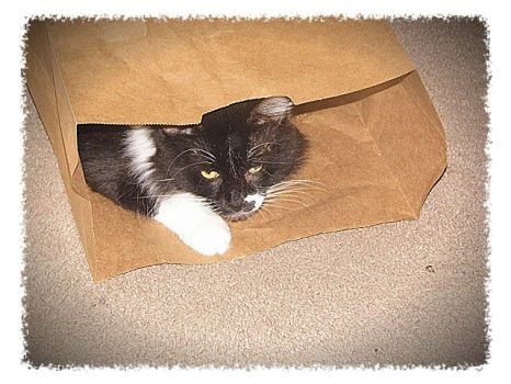 Bag Cat by Kittery
