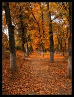 Golden Autumn by AlexandruGatea