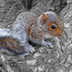 Baby Squirrel by FauxHead
