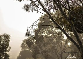 Foggy morning 1 by Bluebuterfly72