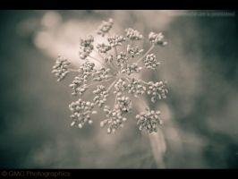 Fennel I by GMCPhotographics