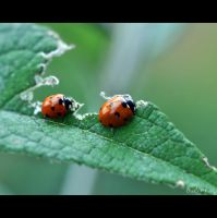 Love is to Share ... by AudreyG-Photographie