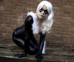 Black Cat by Jerri-Kay