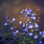 Blue bells by Leo-SA