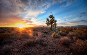 Joshua Tree sunset by jdmimages