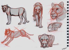 Lion studies by Autlaw