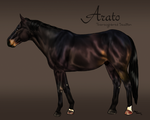 Arato Reference by SkyArrow