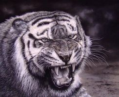 My Tiger, pastels charcoal by AngelaMaySmith