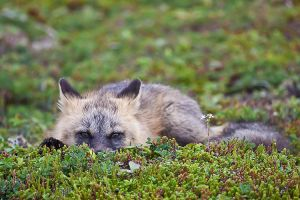 You look like Supper  Baby Fox by Witch-Dr-Tim