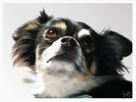 painting of Gizmo by DeEtta