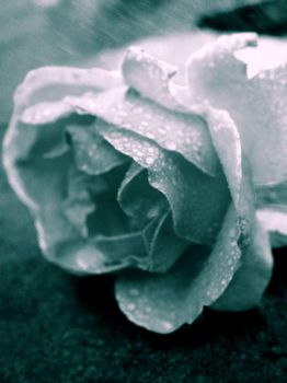 The Rose and the Rain by Mylares