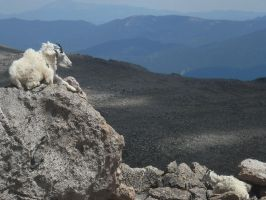 Majestic Goat and Kid. by KlaxonLithology