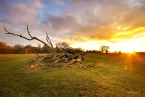 Richmond Park by hotonpictures