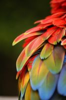 Plumage by Steveprice