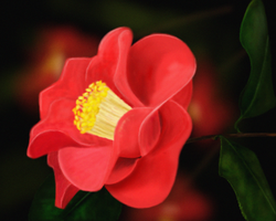 Red Camelia by mottomoyoi