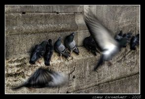 pigeon by bayugly