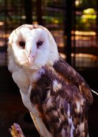 :Owl: by PrePAWSterous