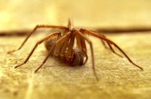 hairy spider by AdrianaKH-75