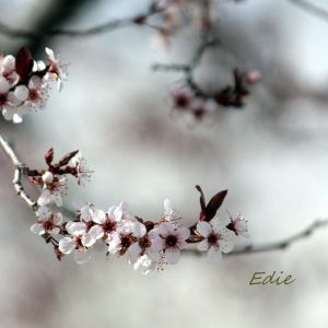 signs of spring by 1001G
