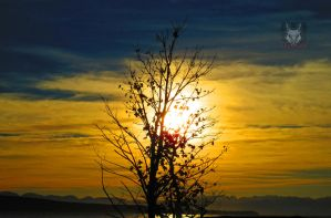 Painted Tree Sunset by wolfwings1
