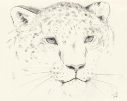 Snow Leopard - Charcoal by Obscuri