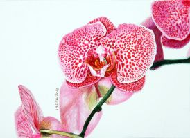 Orchid - ballpoint by UtiliaMignano