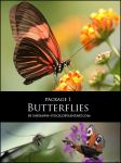 Butterflies package 1 by Indrawn-stock