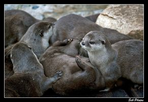 Cuddly otters! by Seb-Photos