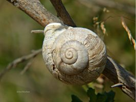 The Beauty of Snails by DaisyDinkle