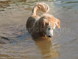 Swimming Dog by To-be-the-happy-one