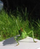 Grasshopper by melemel