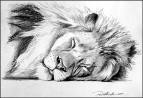 Lazy Lion by tigeress66
