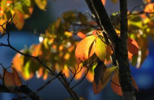 Autumn Morning 10-14-11 by Tailgun2009