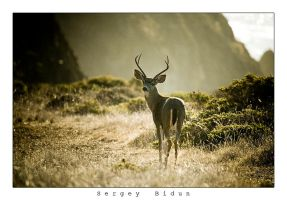 Calm Colors for a Calm Deer... by sergey1984