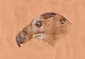 Haasts eagle Harpagornis moorei reconstruction by Bestiarius