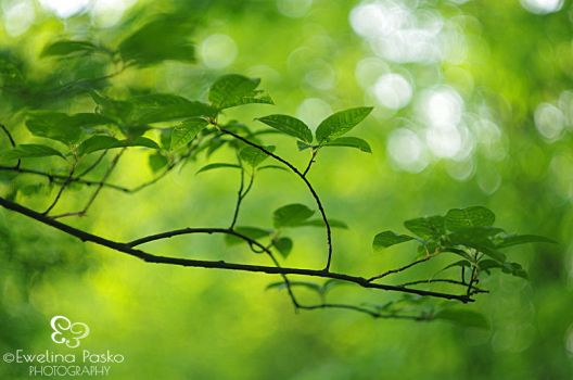 .:Green:. by efeline