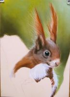 squirrel drawing by mo62