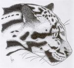 Clouded Leopard by dragonserpent