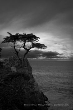 The Lone Cypress by LithiumWing